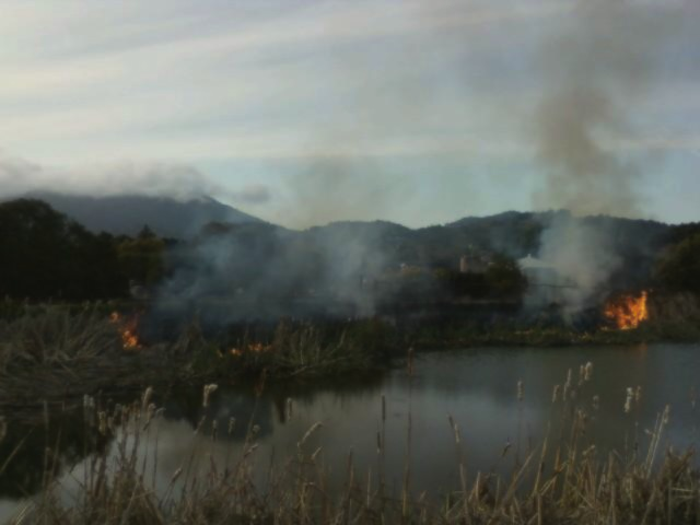 A brush fire broke out near Mill Valley Middle School due to an unknown cause. A nearby Tam News reporter was able to take this picture using a cell phone. Photo by: Chris Yip