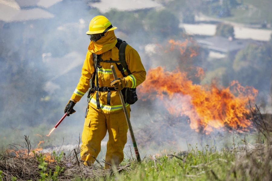 Firefighters conducted a controlled burn on Horse Hill in Mill Valley on Wednesday, April 10, 2019, to prepare for the upcoming fire season. (Ethan Swope)