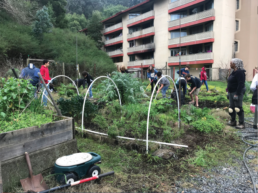 Volunteers participate in cleaning up the Mattie and Clarence Boatman Community Garden in Marin City. (Samantha Nichols)