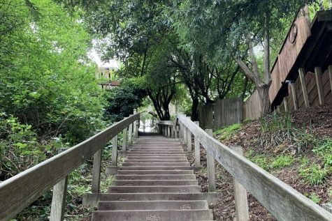 There are 680 steps on the Dipsea trail. (Paige Anderson)